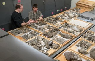 Geologists examining fossils in an archive